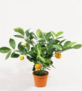 Bilde av Citrus