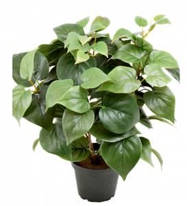 Bilde av Philodendron 35 cm