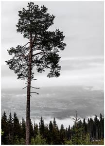 Bilde av Natur fotoprint 2